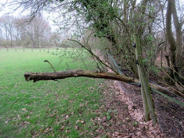 Dead tree across footpath