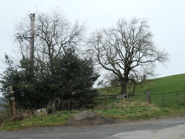 Tree in a field, north of Friar Ings