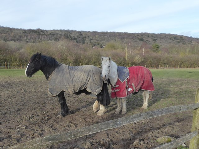 Horses near Trottiscliffe © Marathon :: Geograph Britain and Ireland