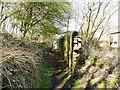 SE2235 : Path along side Cape Mills by Stephen Craven