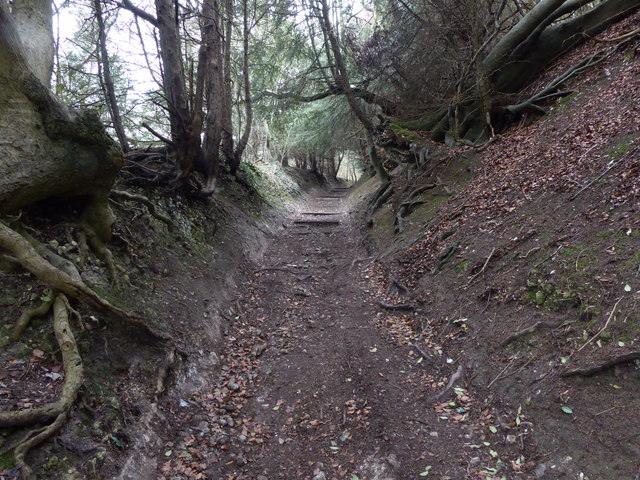 Sunken lane on the North Downs