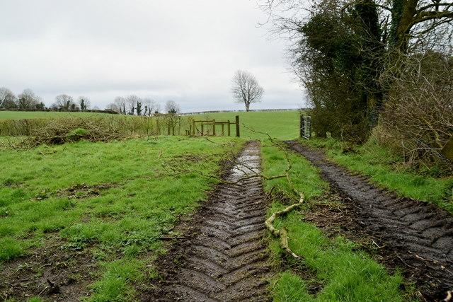 Muddy tracks in field, Tullylinton