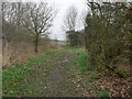 TF8905 : Looking northwest on path on Ashill Common by David Pashley