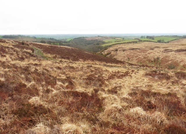 Rough moorland above Anstey's Combe