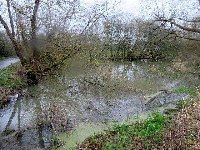 Pond by Black Gate Lane