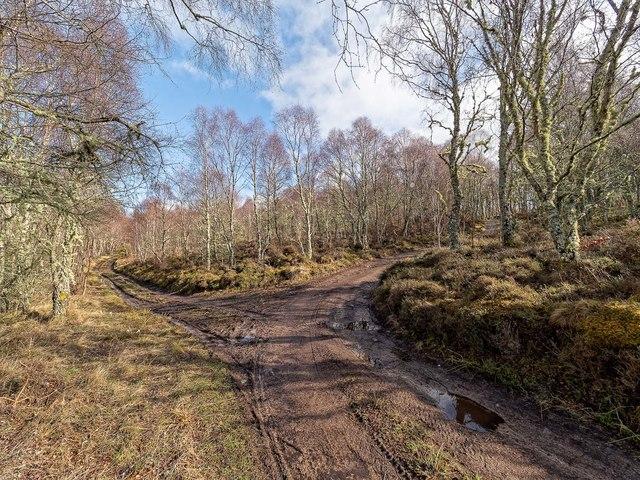 Craigiehowe Wood