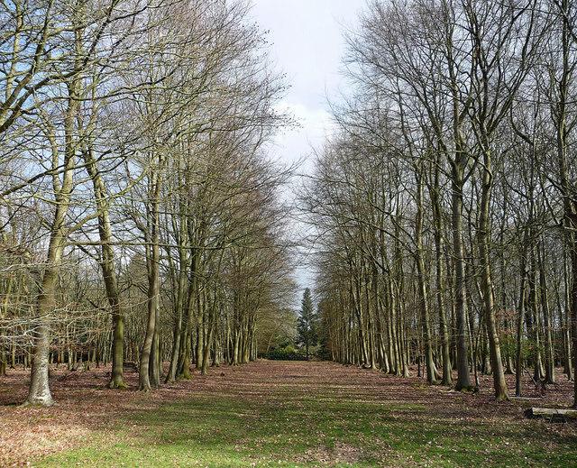 Beeches, Hammerwood