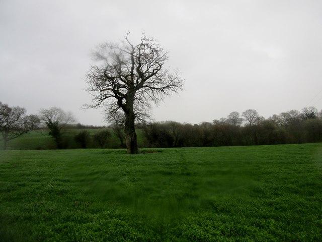 Lone tree adjacent to footpath