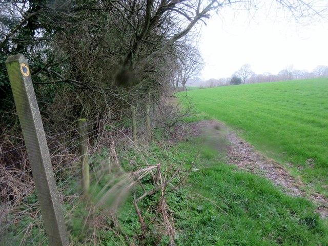 Footpath adjacent to hedge