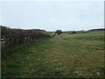 SE1986 : Hedged and fenced field boundary, west of Rookwith by Christine Johnstone