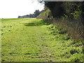 TF7333 : Headland and pheasant feeder by Bircham Plantation by Adrian S Pye