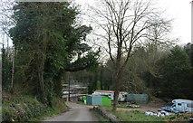 ST8992 : Woodland by Newnton Road, Tetbury by David Howard