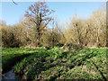 TQ2836 : Stream through Waterlea Meadow by Robin Webster