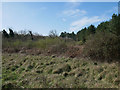 TL7898 : Area of scrub beside forest road 154 by David Pashley