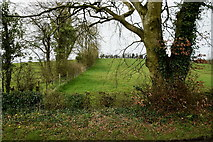 H6056 : Tree, Sess by Kenneth  Allen