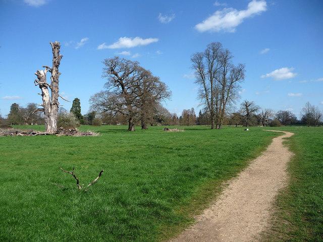 Parkland near Wexham (4)