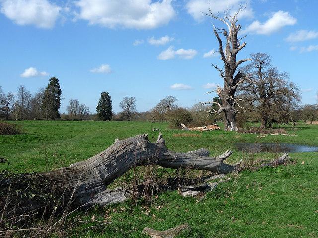 Parkland near Wexham (6)