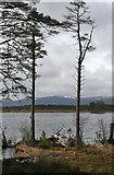 NH9617 : Loch Mallachie by Anne Burgess