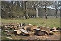 SU2119 : Newly sawn logs by David Martin