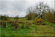 H5371 : Bancran Townland by Kenneth  Allen