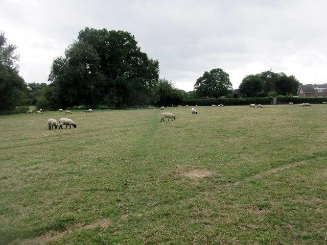 Sussex Border Path (3)