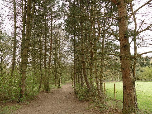 Golden Acre Park - arboretum (1)
