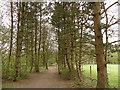 SE2642 : Golden Acre Park - arboretum (1) by Stephen Craven