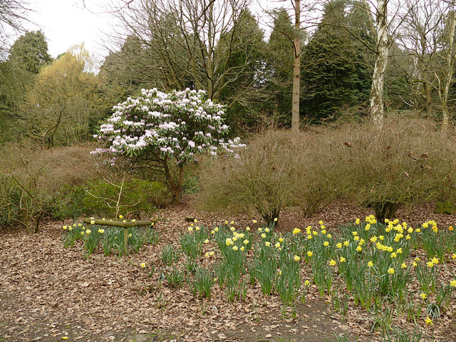 Daffodils and blossom in Golden Acre Park