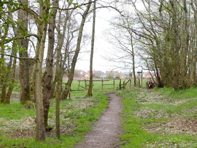 Path Through Woodland at Clifton Moss