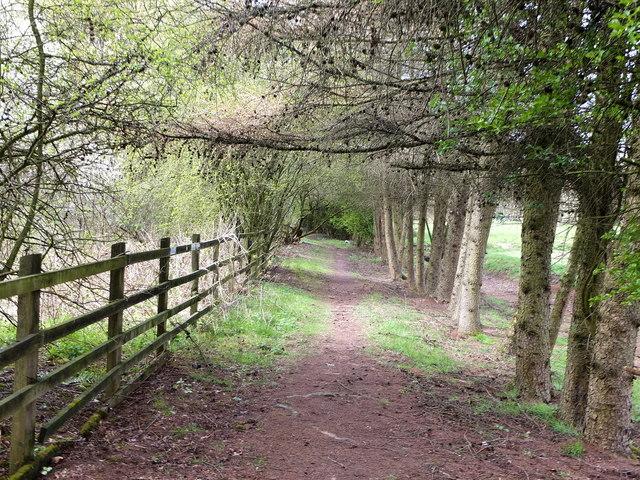 Path near Manor Farm, Kearsley Moss