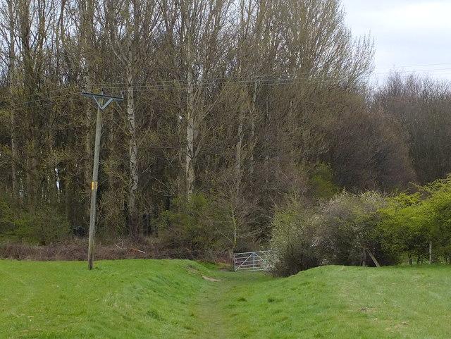 The Salford Trail at Linnyshaw Moss