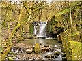 SD8019 : Waterfall on Dearden Brook by David Dixon