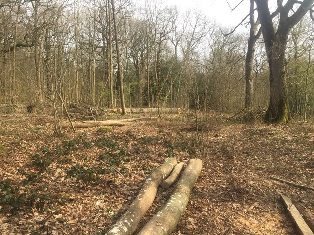 Coppicing, Long Coppice