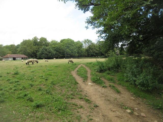 Sussex Border Path (4)