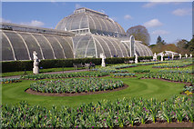 TQ1876 : The Palm House, Kew Gardens by Stephen McKay