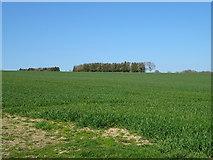 SO5793 : Crop field near Larden Grange by JThomas