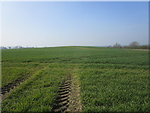SK8037 : Cereal field near Bottesford Wharf by Jonathan Thacker