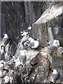 NT6599 : Kittiwake Towers by Oliver Dixon
