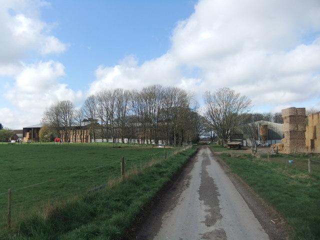 Neswick Farm by David Brown