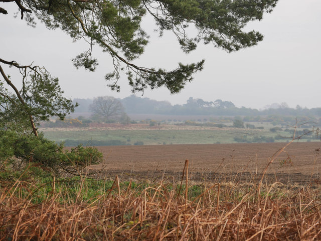 Breckland morning landscape