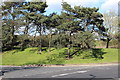 SK5302 : Trees by access to Leicester Forest East Services by M J Roscoe