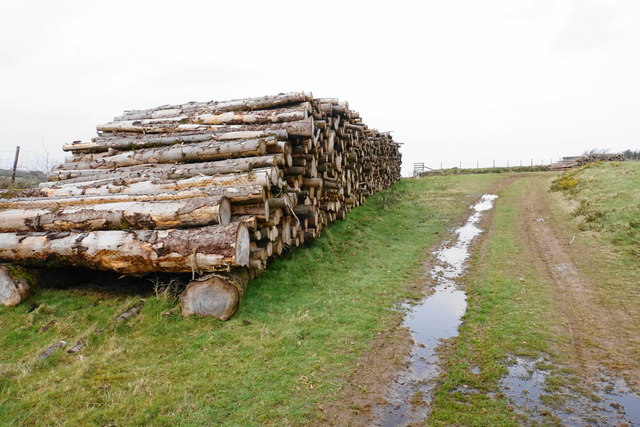 Pile of logs on Old Burrow Hill