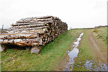 SS7849 : Pile of logs on Old Burrow Hill by Bill Boaden