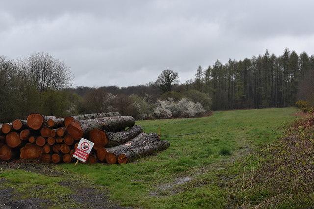 Log pile at Priest Hill, Nettlebed Common