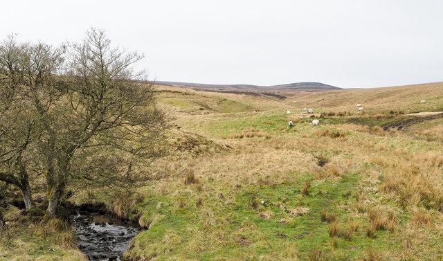 Moorland beside Crow Burn
