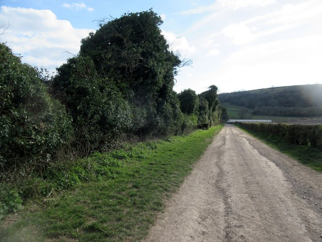 Farm track next to ivy covered trees