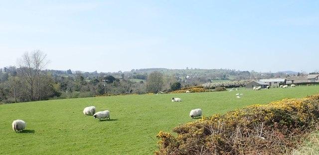 Grazing land overlooking the Burren Valley