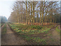 TL7892 : Beech woodland with tracks either side by David Pashley