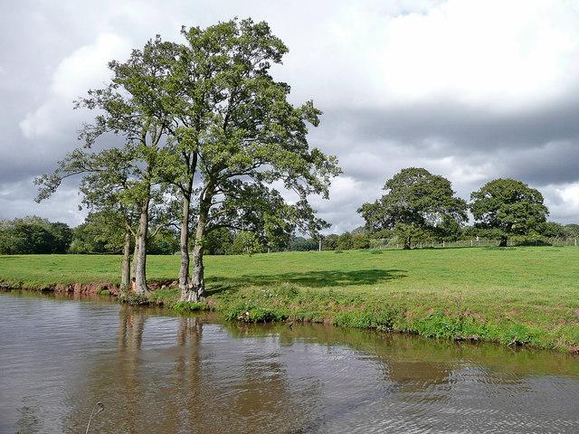 Canalside pasture north of Barlaston in Staffordshire
