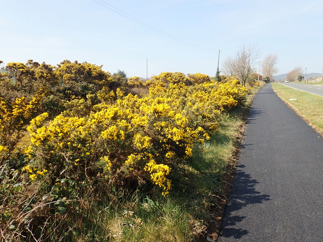 The Newcastle to Castlewellan Cycling/Walking Path alongside the A50